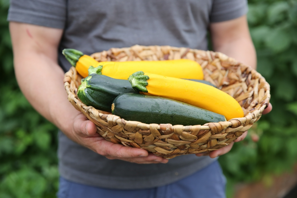 hands holding a bowl of zucchini and yellow squash
