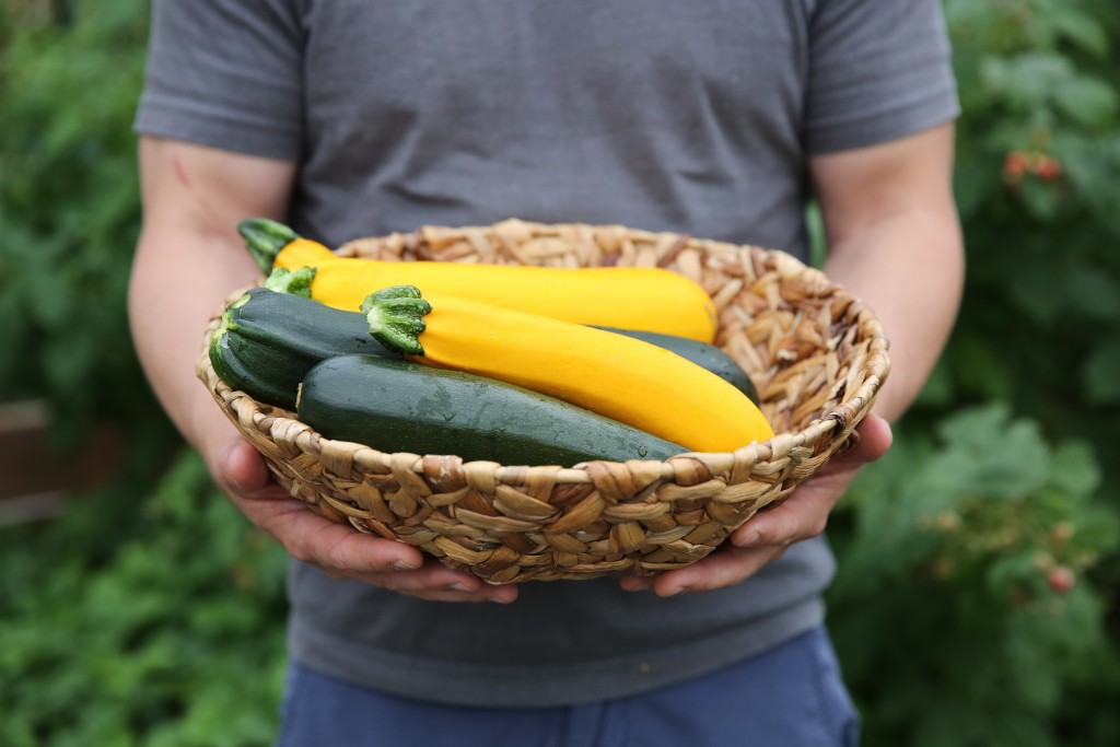 hands holding a basket of zucchini and yellow squash
