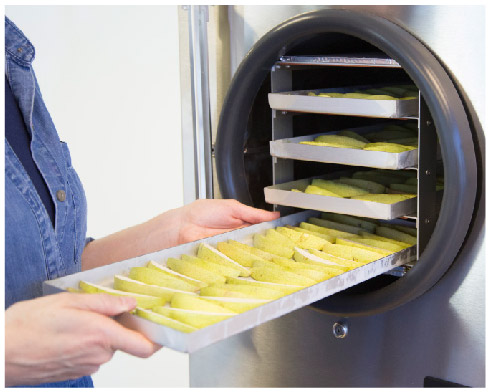 Sliced apples being put into a freeze dryer
