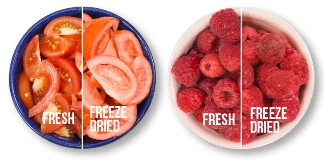comparison of fresh vs freeze dried: tomatoes and raspberries