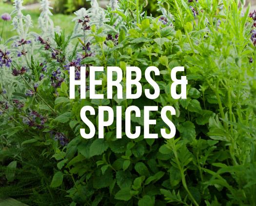 Herbs & Spices. A herb garden
